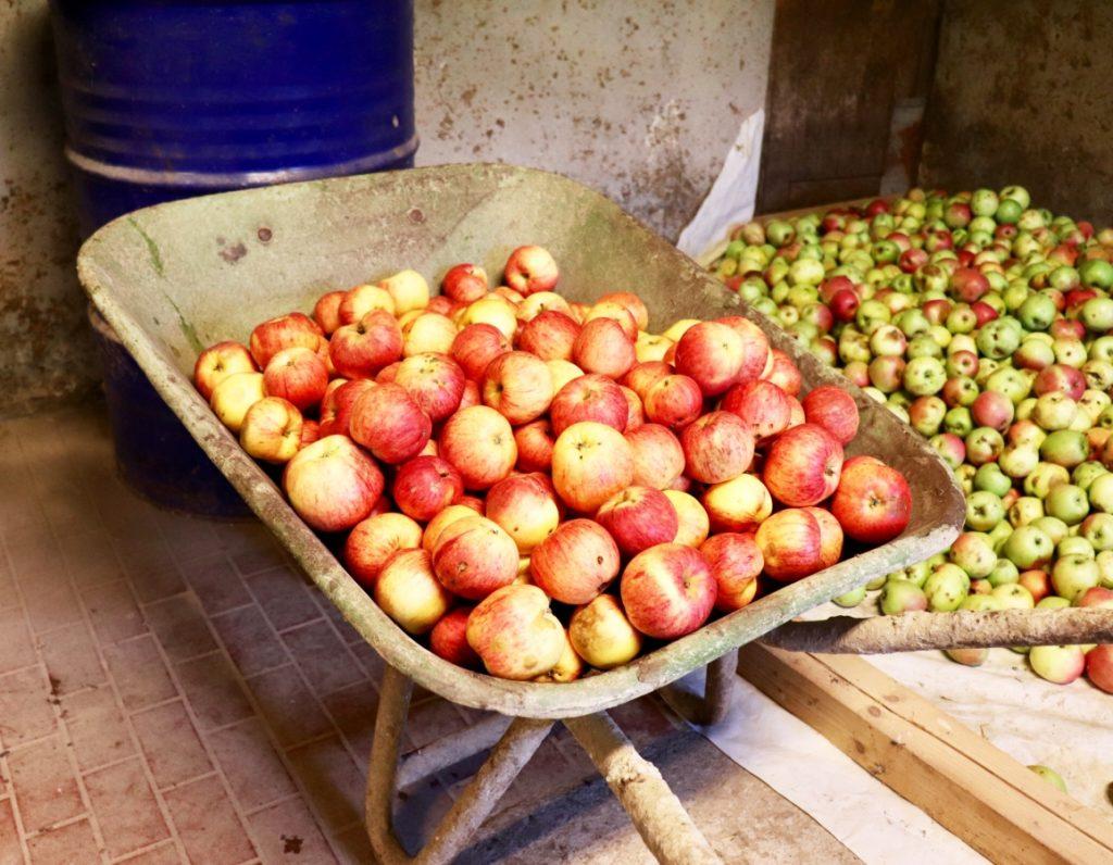 Äpfel in einer Schubkarre