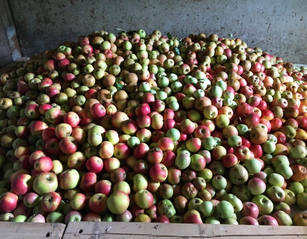 angehäufte Äpfel