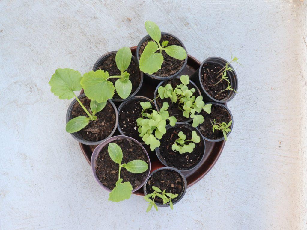 Pflanzen im Topf - bereit für den Balkon